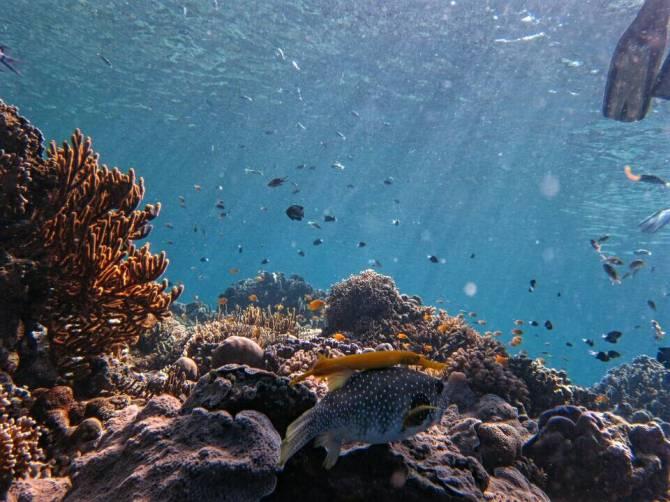 Menjangan Island, West Bali, Indonesia