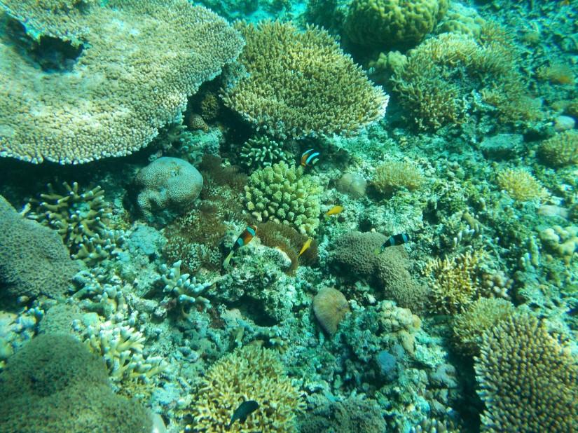 Underwater Gili Meno