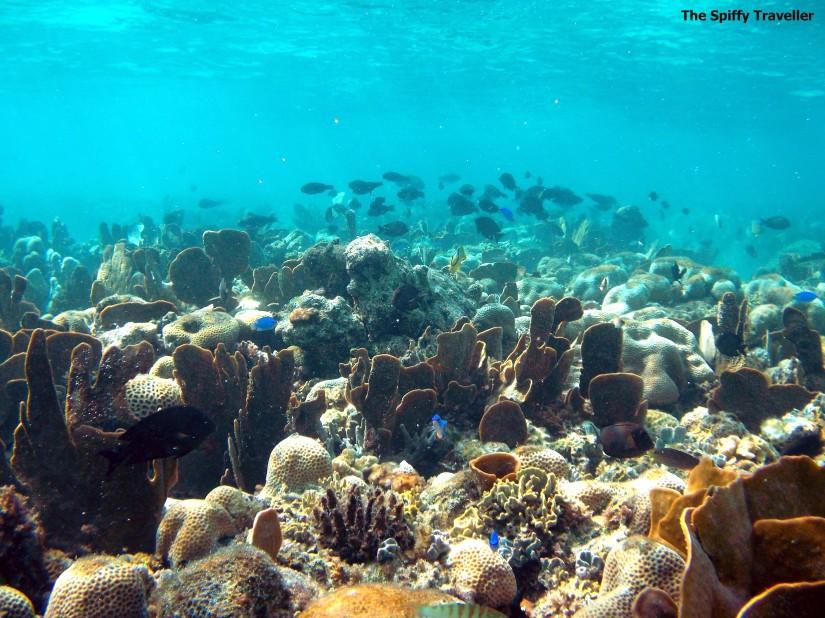 Taupan Reef