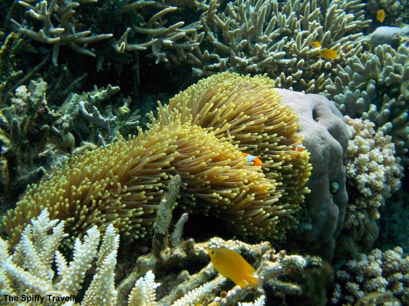 Bomba Atoll Togean