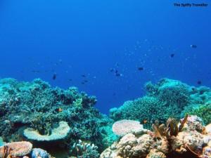 Bomba Atoll , Togean