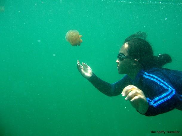 mengejar ubur-ubur pic