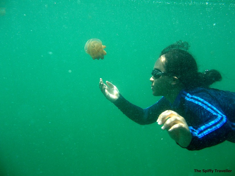 Snorkeling at Stingless Jellyfish, Mariona Lake