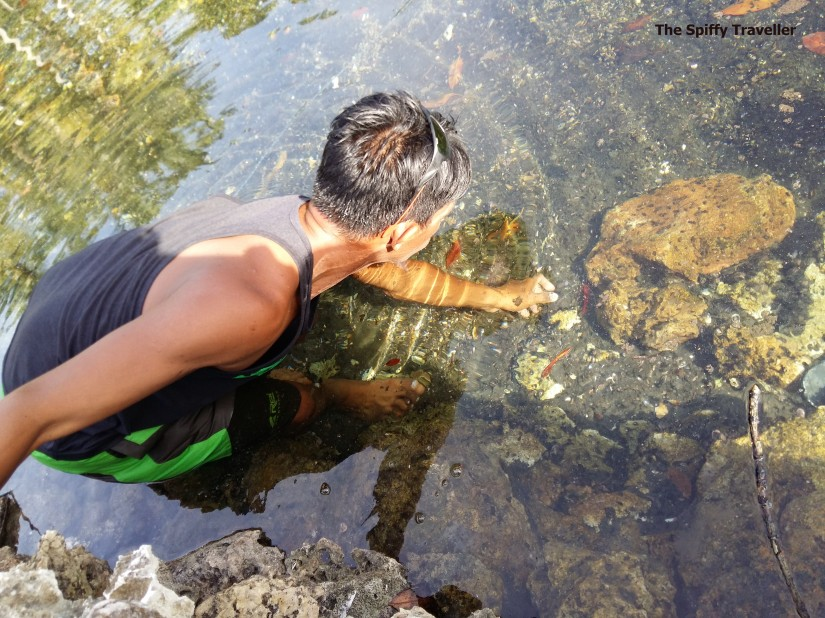 Pulau Taupan