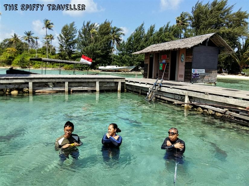 Penangkaran hiu pulau Menjangan Besar
