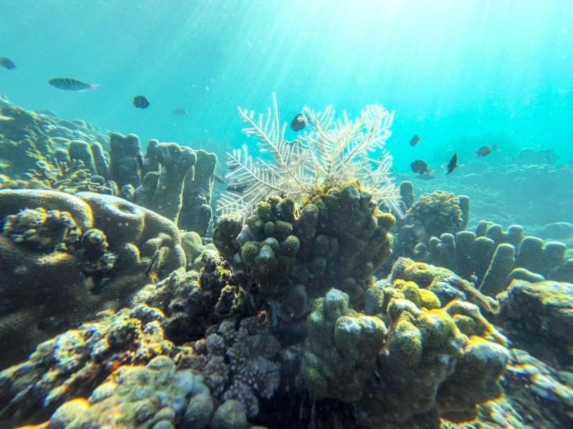 Underwater of Amed, Bali