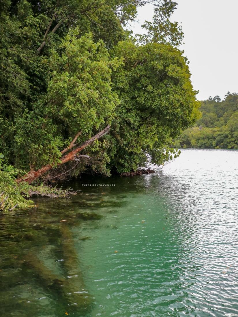 Kejernihan Danau Kakaban