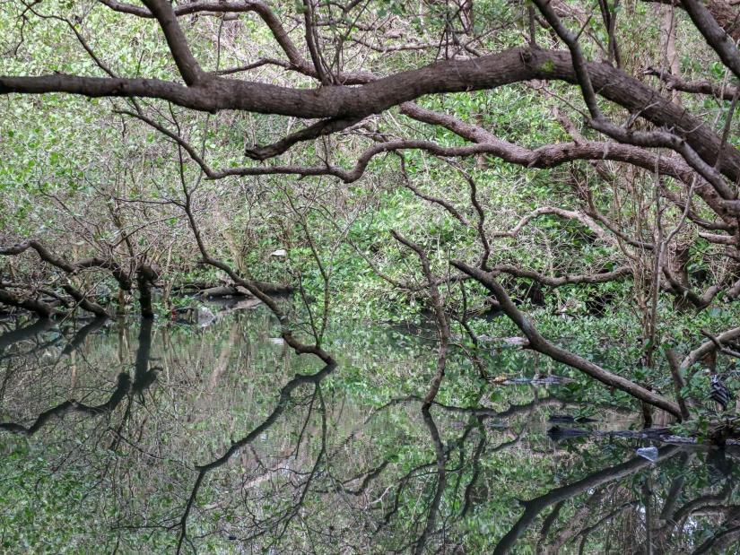 Hutan Mangrove Suwung, Bali