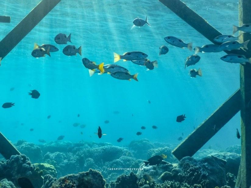 Snorkeling di Pulau Maratua