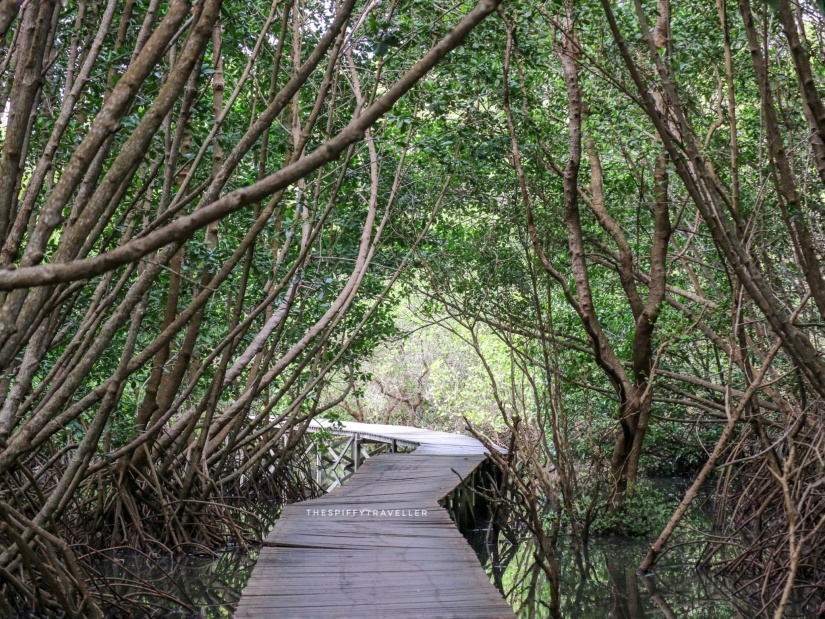 Mangrove Suwung, Bali