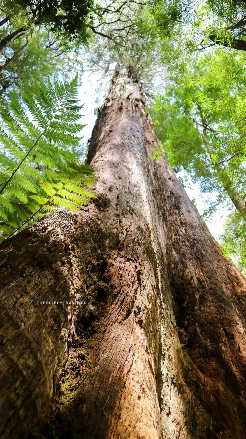 Great Otway National Park, Australia